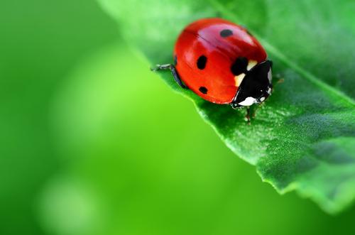 虫が怖い心理とは?アウトドアを楽しむコツ