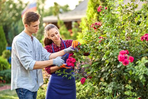 花を育てる心理で男性の性格が分かることも?